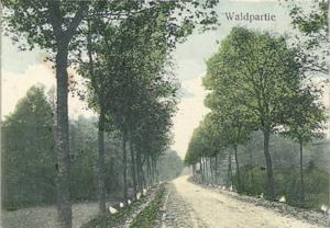 Droga łącząca Nowe Biskupice z Kunowicami, a także Kowalowem.  To właśnie wzdłuż tej szosy powstały pierwsze zagrody w dawnym Neu Bischofsee (pocztówka z okresu przedwojennego)