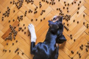 Dog Food 5175619 1920